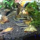 川魚ほか色々
