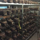 土壌改良に最適な廃菌床!