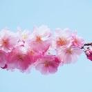 4/2(日)150人規模‼️満開花見交流会🌸
