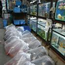 【未経験可】情緒あふれる老舗金魚店での販売・作業アルバイト募集
