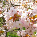 旬スポット体験&遊べて楽しいイージー婚活♪京都府立植物園de婚活&恋活♪