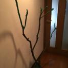 DIY 流木 自然木