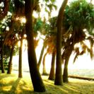 宮崎県宮崎市「青島ゲストハウス風樹」です。格安で快適にシェアハウス...