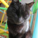 生後半年程の黒猫、大人しいオスです。