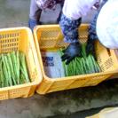 4月中旬〜 短期農業アルバイト募集