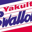 ヤクルトスワローズファンの友達募集(^o^)