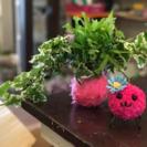 【野庭なごりの】苔玉&盆栽教室