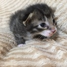 かわいい子猫6匹です。里親募集中の画像