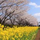*春のお花見*