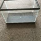 テトラ40cm ガラス水槽