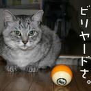 ビリヤード友達(* ॑꒳ ॑* )⋆*