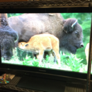 仮決定【完動品】Panasonic 42型 プラズマテレビ