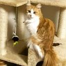 キュートで活発な美猫ちゃん。