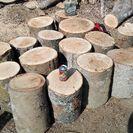 薪に!広葉樹ケヤキの丸太。長さ約35㎝。平成29年2月伐採。0.1...