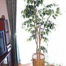 フェイク観葉植物 ベンジャミン