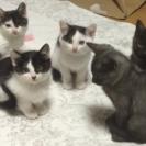 9月中旬生まれ、5匹の子猫