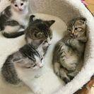 【愛知県】2月生まれの子猫、大切に家族として暮らしていただける方に...
