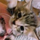 生後1か月の子猫