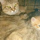 ペルシャ子猫❗