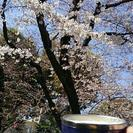 4/1(土)鶴舞公園で花見 昼頃~21時半まで
