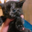生後1か月の子猫ちゃん
