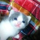 グレトラの仔猫4ニャンズ