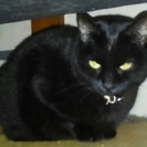人懐っこい黒猫ジジちゃん♀