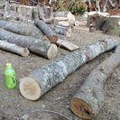 薪に!広葉樹ケヤキの原木丸太。平成29年2月伐採。0.1立米価格。...