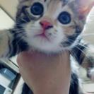 2ヶ月の女の子。ポポロちゃん