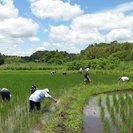 お米づくり体験(田植えから稲刈りまで) - 山武市