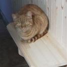 不幸な野良猫が増えないように猫の避妊去勢の手術引き受けます。