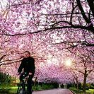 造幣局のお花見4月13日に一緒にいきませんか?
