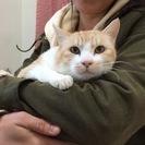 抱っこが好きなおとなしい大人猫、竹くん