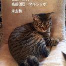 猫の里親探しています m(__)m
