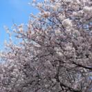 花見🌸❗️4月15日土曜 金沢犀川緑地公園