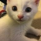 白猫男の子