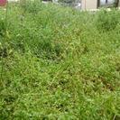 草刈り、除草剤散布、