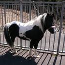 犬と馬の好きな人