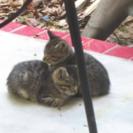 5匹の子猫たちの運命を変えられる人...