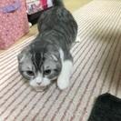 猫ちゃん、貰って下さい。の画像