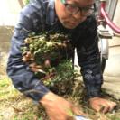 庭木の剪定 除草施工専門店 つちや造園