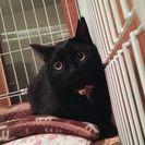 丸顔の美人な黒猫ちゃん