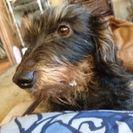 引っ越しで犬が飼えなくなりました❗可愛がってくれる人を探しています。