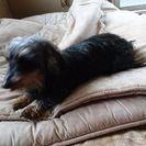引っ越しで犬が飼えなくなりました。可愛がってくれる人を探しています。