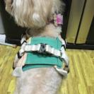 小型犬用ハーネス