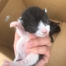 生後数日の子猫2匹