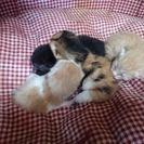 産まれたばかりの子猫です