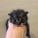 今日保護した子猫です(>_<)