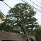 【東京・神奈川】植木・庭手入れ(お見積り無料)