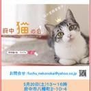 府中猫の譲渡会、開催(5月20日(土)13~16時、@府中)【府中...